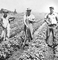 Photo of Berry Farmers